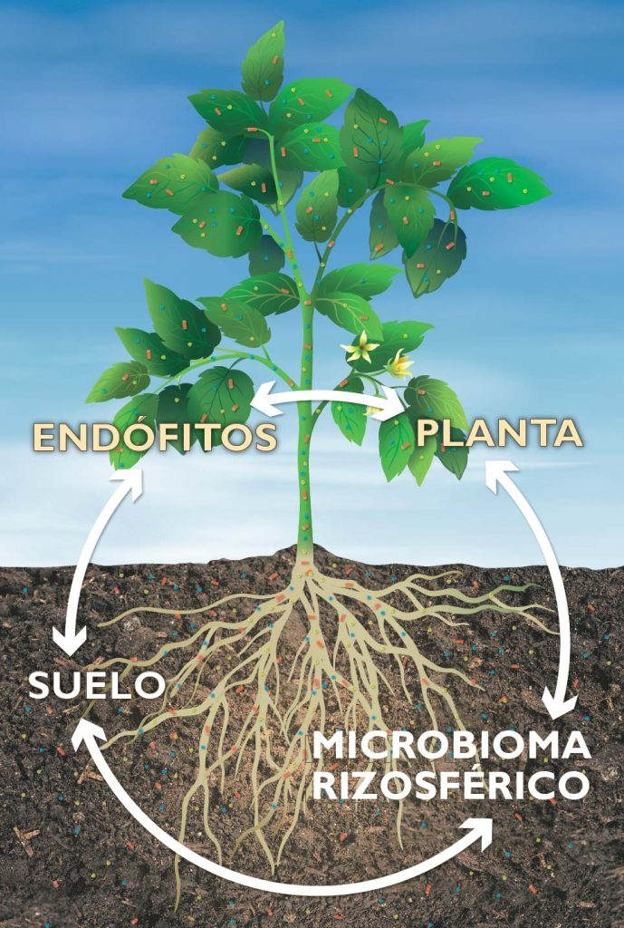 biofertilizantes ecológicos