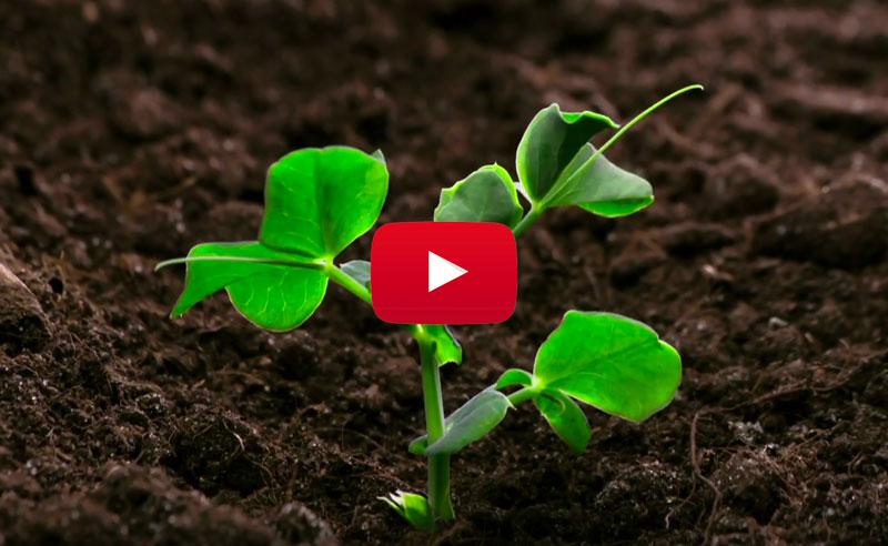 vídeo probióticos para cultivos